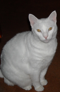 Sammy-eyes