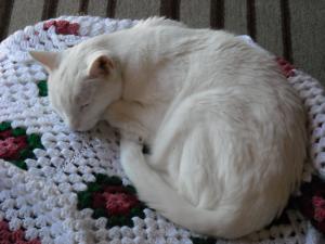 sammy-sleeping
