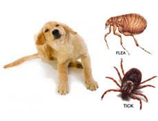 FLEA-AND-TICK-DOG1