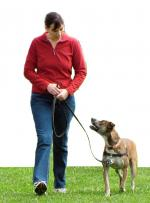 dog_on_leash